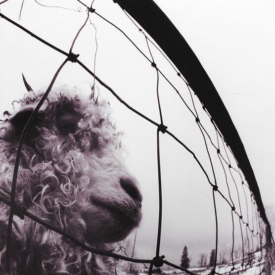 Pearl Jam - Vs. - Vinyl