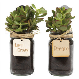 Mason Jar Planter - Assorted - 500ml