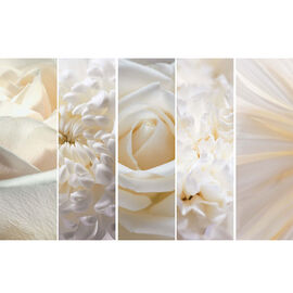 Alto Canvas Set - White Flowers - Set of 5