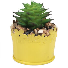 London Drugs Micro Plant Short Pot - 5.5 x 5.5 x 7cm