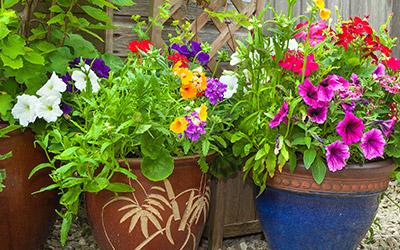 Outdoor and Indoor Planters