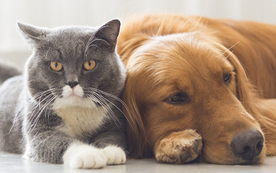 Pet Supplies & Pet Food – Shop Online for Dog and Cat